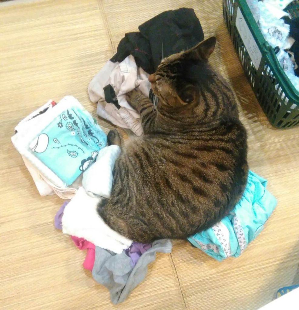 洗濯物のじゃまをする猫