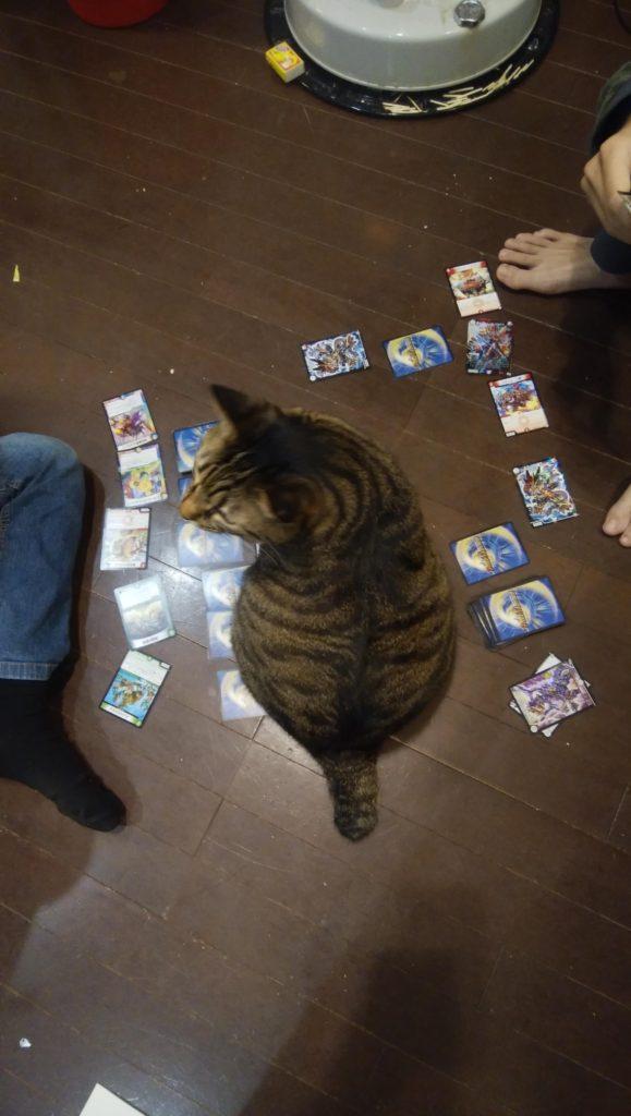カードゲームのじゃまをする猫