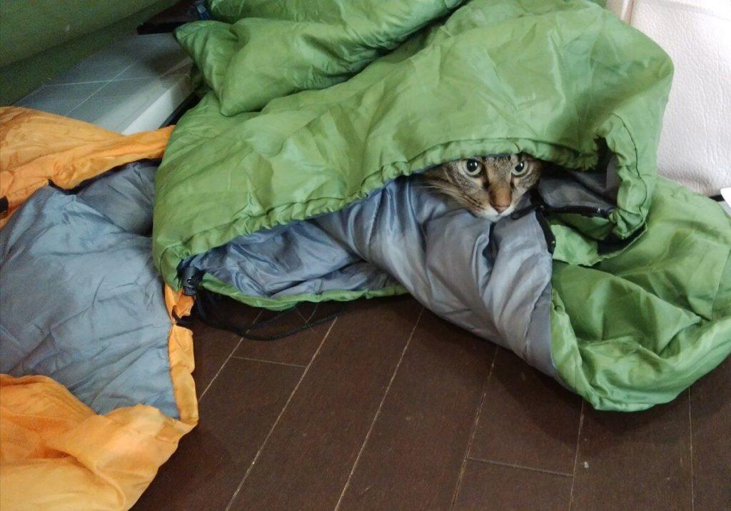 寝袋の片づけをじゃまする猫