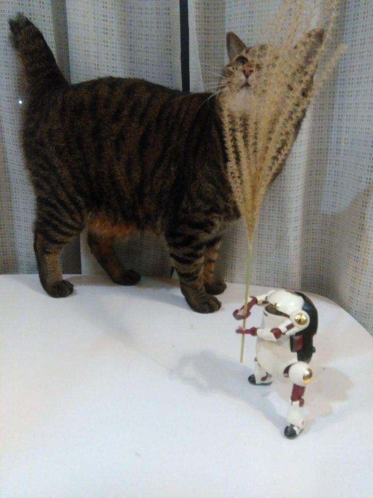 ウィーゴと猫