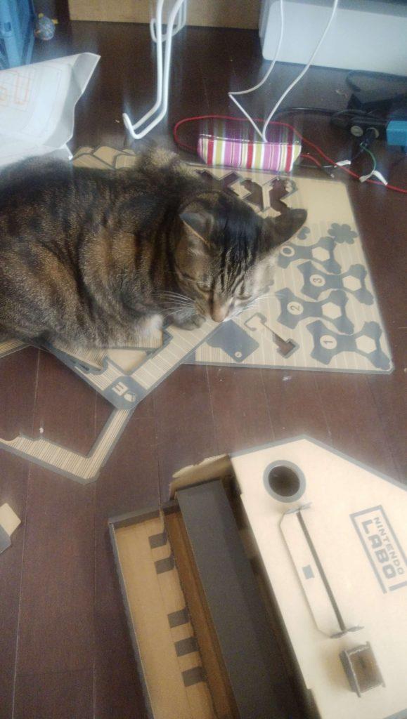 NINTENDOLABOの邪魔をする猫