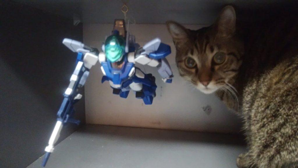 プラモと猫