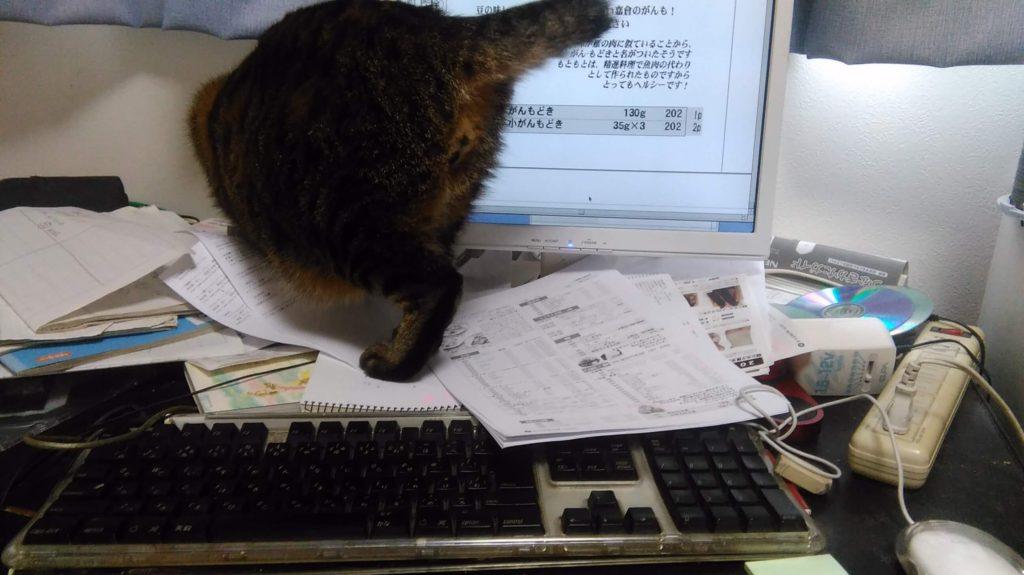 仕事のじゃまをする子猫