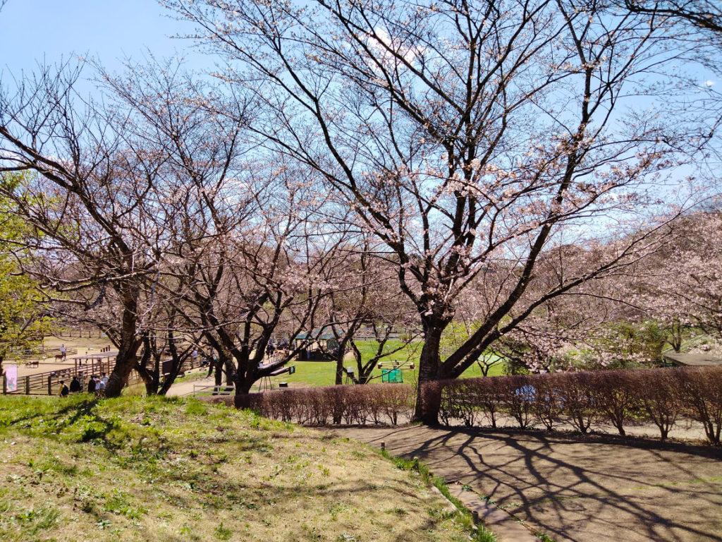 成田ゆめ牧場桜
